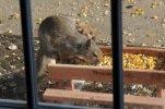 PicnicTableSquirrel.JPG
