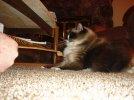 Daffy Cat DSC02159.JPG